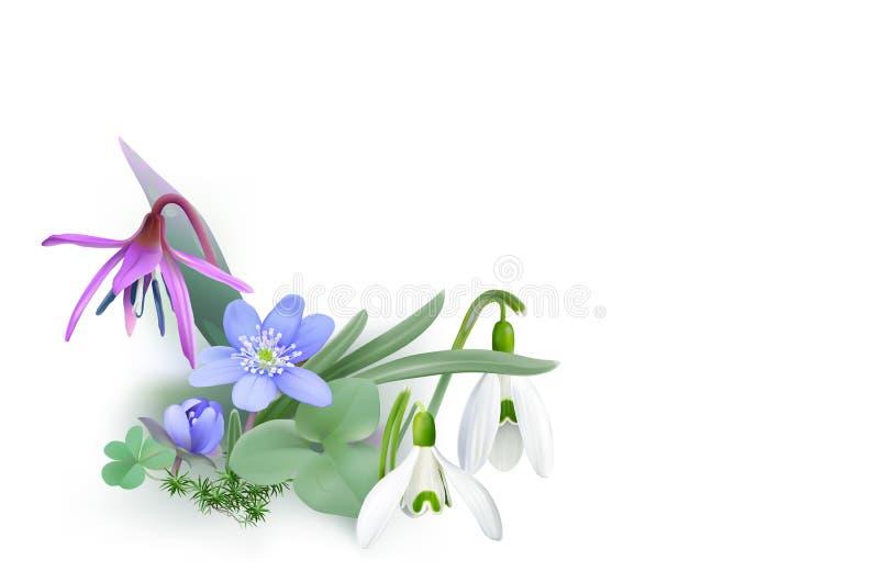 Пук леса цветет, посыльные весны - предпосылки бесплатная иллюстрация