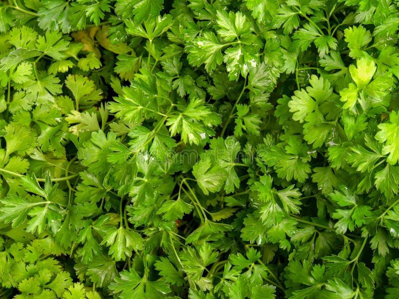 Пук листьев петрушки в рынке стоковые изображения rf