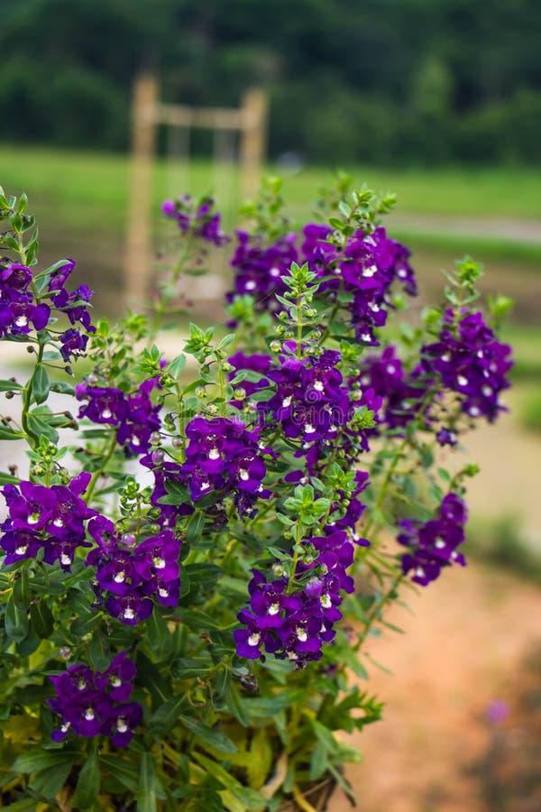 Пук маленьких фиолетовых цветков стоковые фото