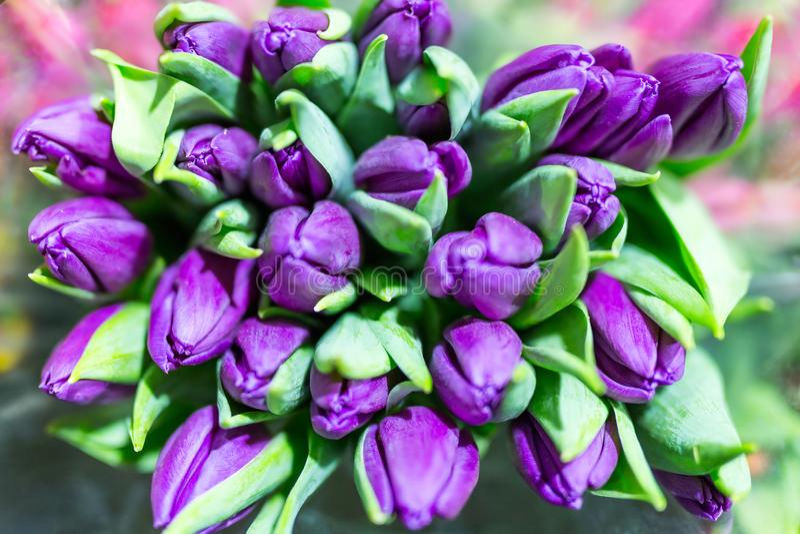 Пук много красивых свежих фиолетовых тюльпанов Оптом и в розницу магазин цветка Цветочный магазин или рынок Концепция обслуживани стоковые изображения