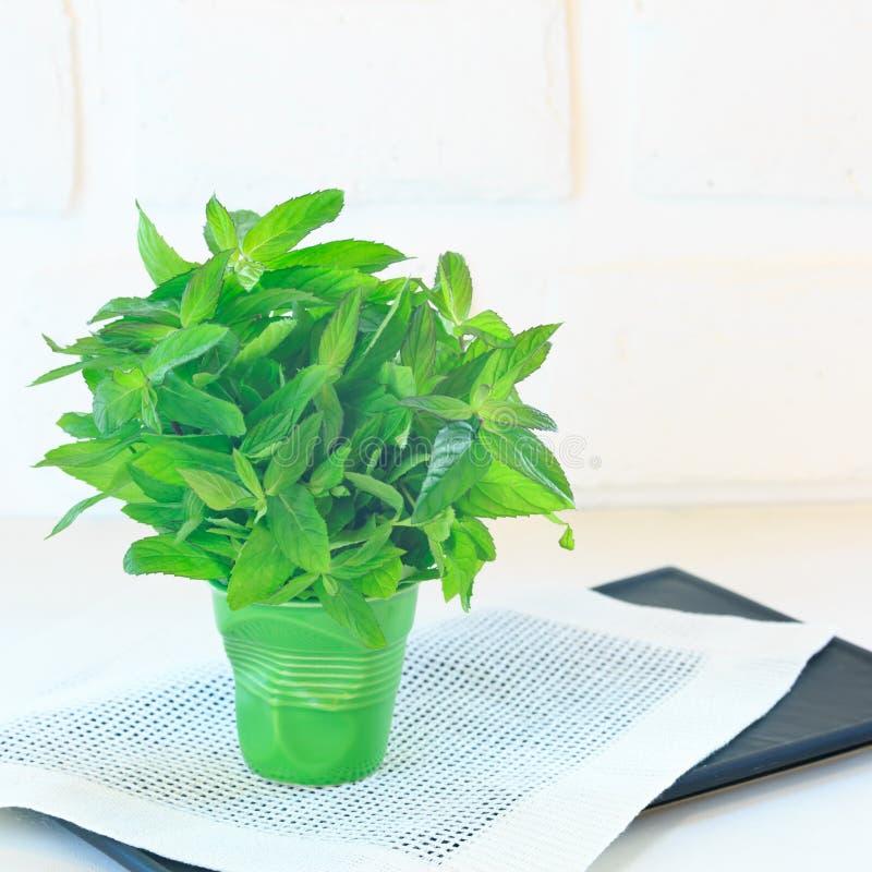 Пук мяты в зеленом стекле стоковые фото