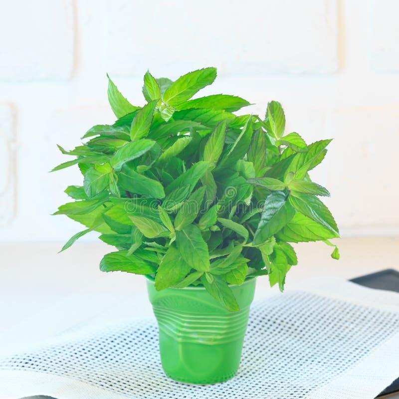 Пук мяты в зеленом стекле стоковое фото rf
