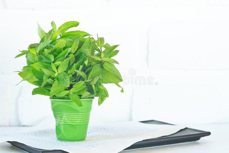 Пук мяты в зеленом стекле стоковое изображение