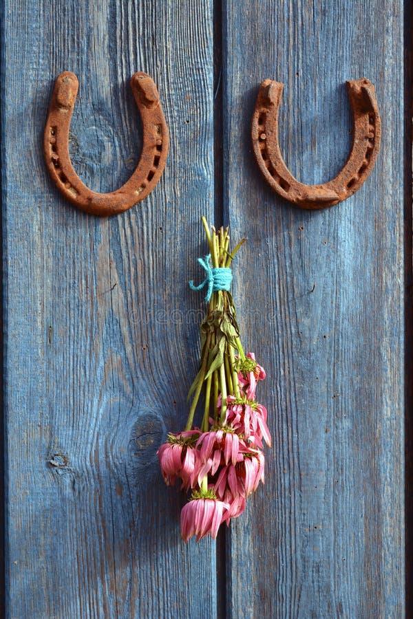 Пук ржавые подкова и цветок эхинацеи медицинский на голубой деревянной стене стоковые фото