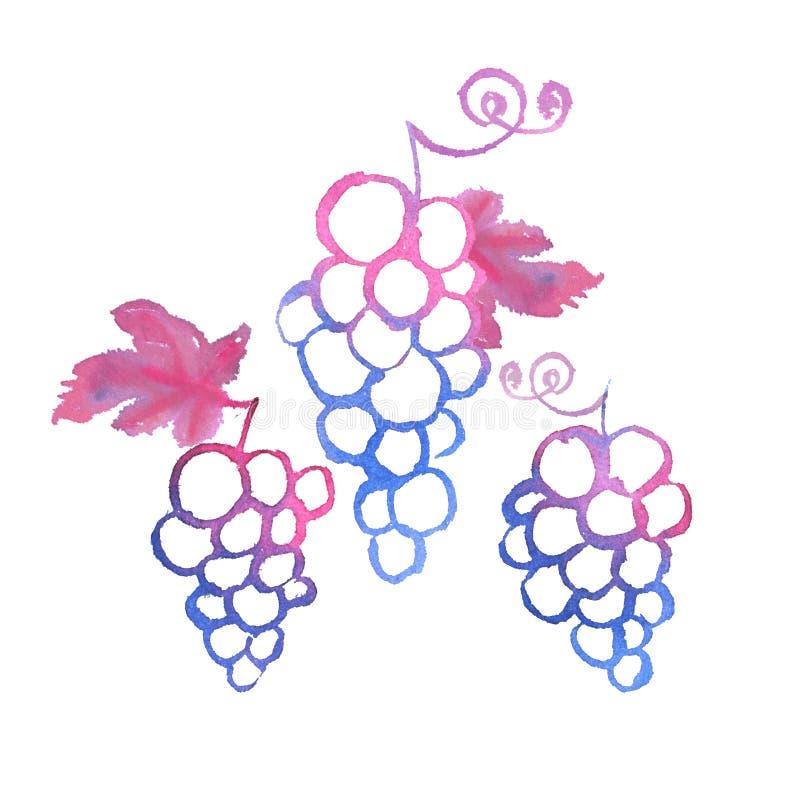 Пук розовой иллюстрации акварели виноградин иллюстрация вектора