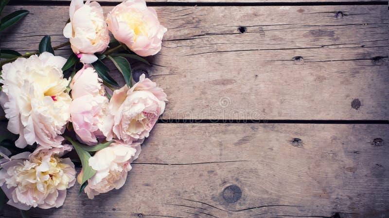 Пук розовых пионов цветет на постаретой деревянной предпосылке стоковые изображения