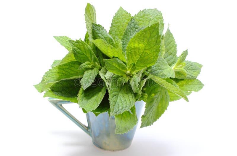 Пук свежей зеленой мяты в стеклянной чашке на белой предпосылке стоковое изображение