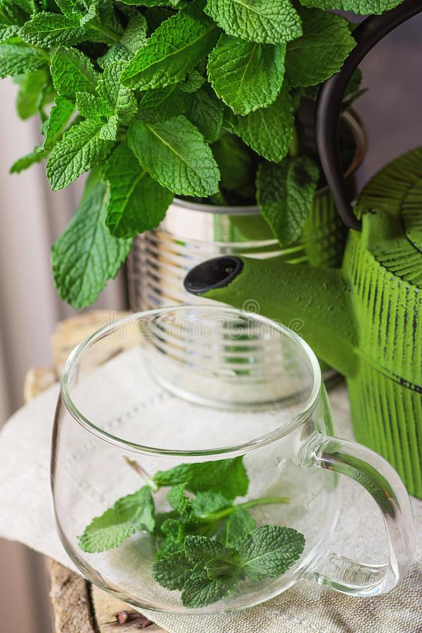 Пук свежей мяты в баке зеленого цвета чашки жестяной коробки стеклянном на Linen полотенце подготавливая заварить очищать вытрезв стоковые изображения rf