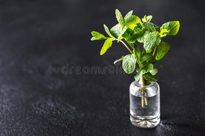 Пук свежей мяты в стеклянной вазе стоковое фото