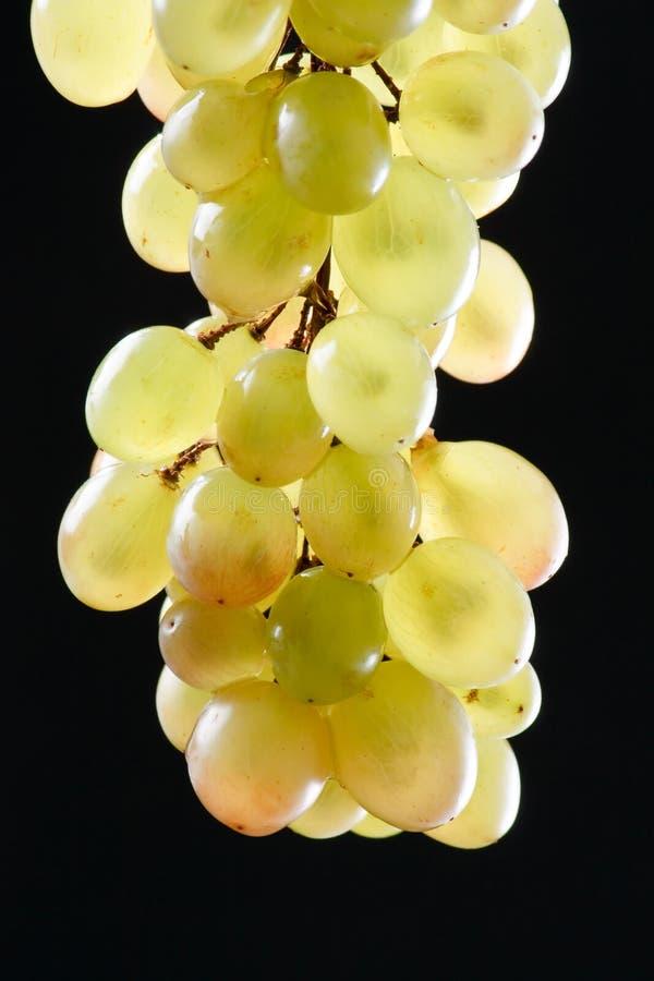 Пук свежих виноградин стоковые фото