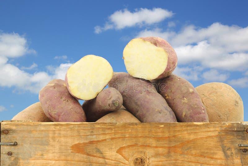 Пук смешанных сладких картофелей и отрезок одно в деревянной клети стоковая фотография