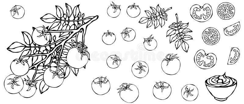 Пук томатов вишни на ветви с листьями и шаром кетчуп Ботаническая садовничая иллюстрация Логотип кетчуп или соль овоща бесплатная иллюстрация