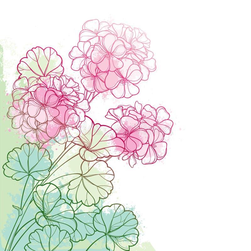 Пук угла вектора с цветком гераниума или Cranesbills пинка плана и богато украшенными лист на пастельной зеленой предпосылке бесплатная иллюстрация