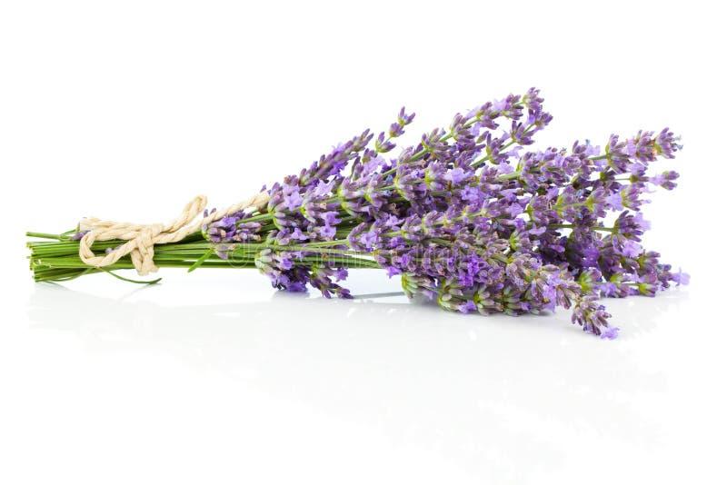 пук цветет лаванда стоковое изображение
