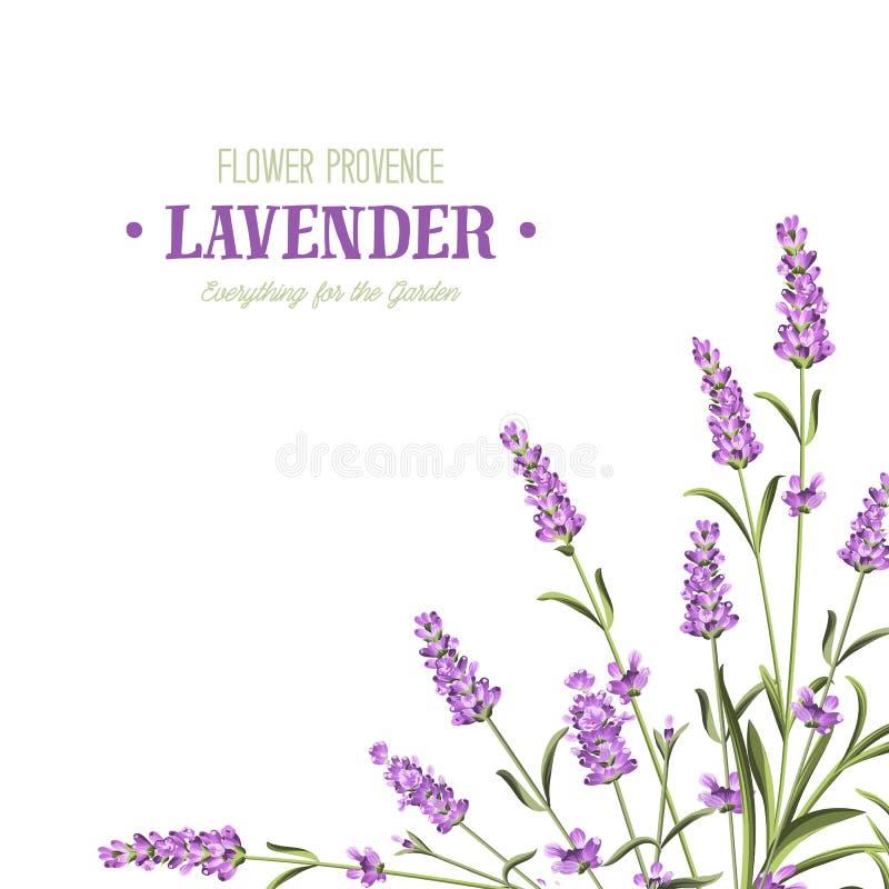 пук цветет лаванда иллюстрация вектора