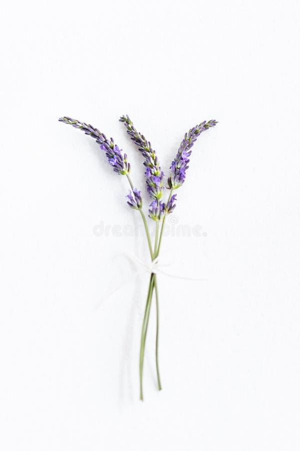 пук цветет лаванда стоковое фото