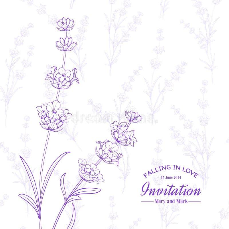 пук цветет лаванда иллюстрация штока