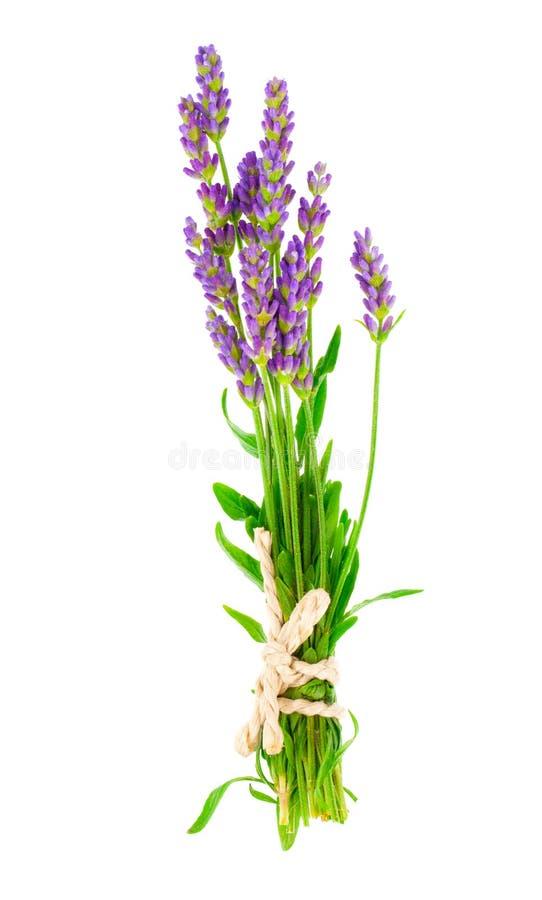 Пук цветков лаванды стоковое изображение rf