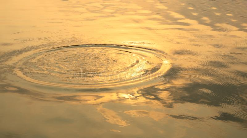 Пульсация круга золота от падения дождя на поверхности воды во дне утра Теплая оранжевая поверхность воды для предпосылки стоковое фото rf