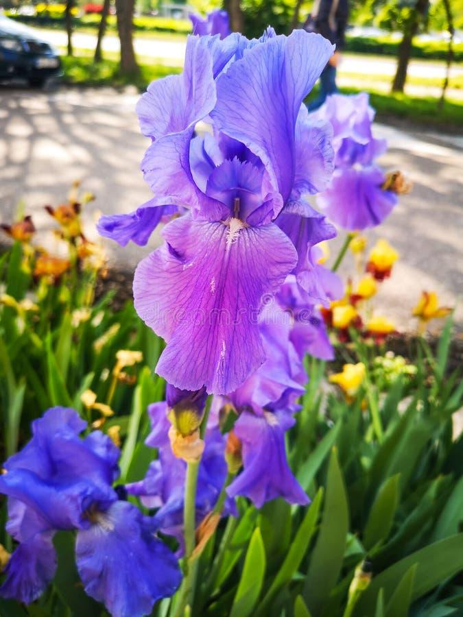 Пурпурная орхидея в парке стоковое изображение rf
