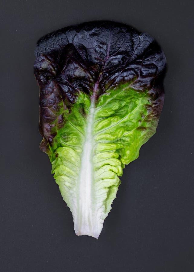Пурпурное ettuce выходит на черную предпосылку Собрание пурпурного набора салата салата Oakleaf Здоровая dieting концепция стоковые фото