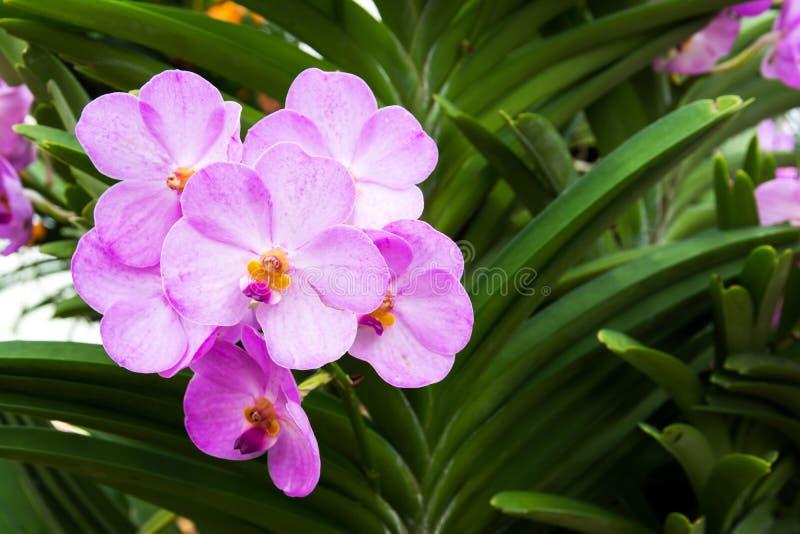 Пурпурные орхидеи в парке стоковые фотографии rf