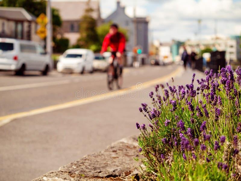 Пурпурные цветки в городке, абстрактной предпосылке городской жизни, выборочном фокусе r Человек на велосипеде на заднем плане стоковые фотографии rf