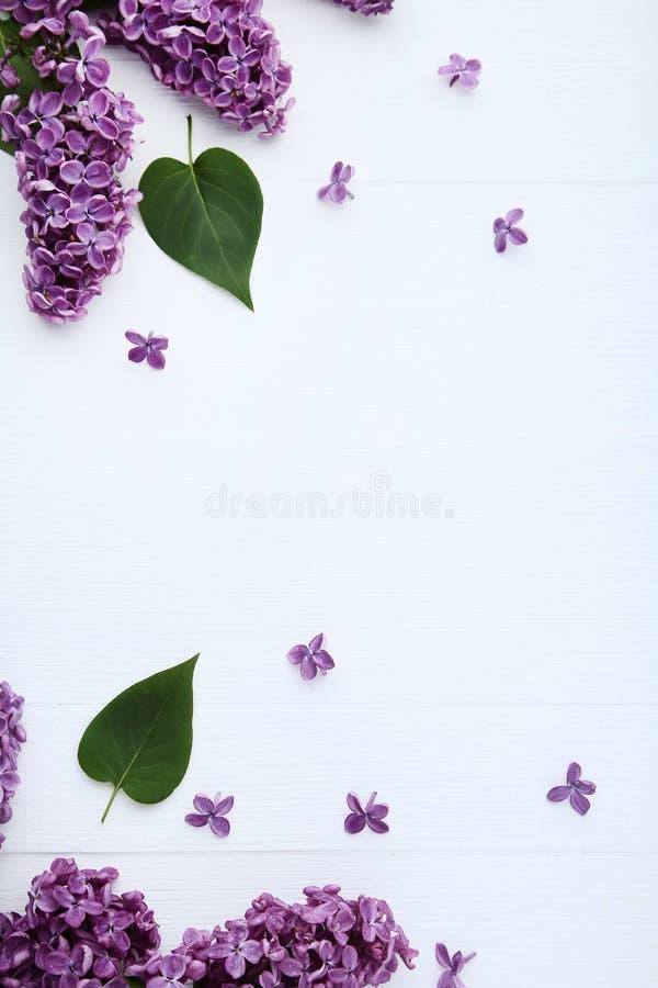 Пурпурные цветки сирени стоковое изображение rf