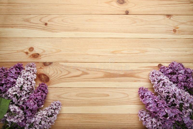 Пурпурные цветки сирени стоковое изображение