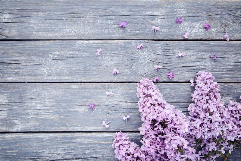 Пурпурные цветки сирени стоковое фото rf