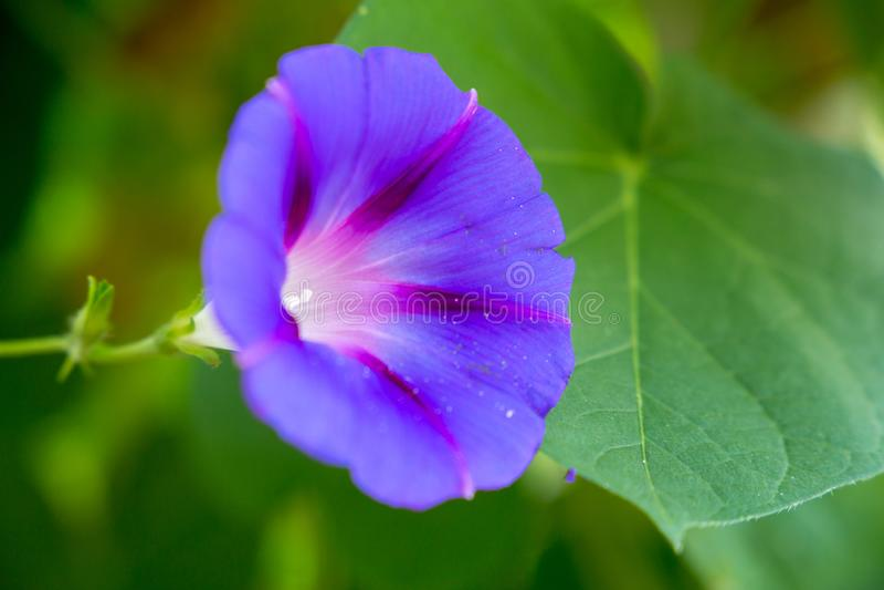 Пурпурный цветок меньшая красота стоковые изображения