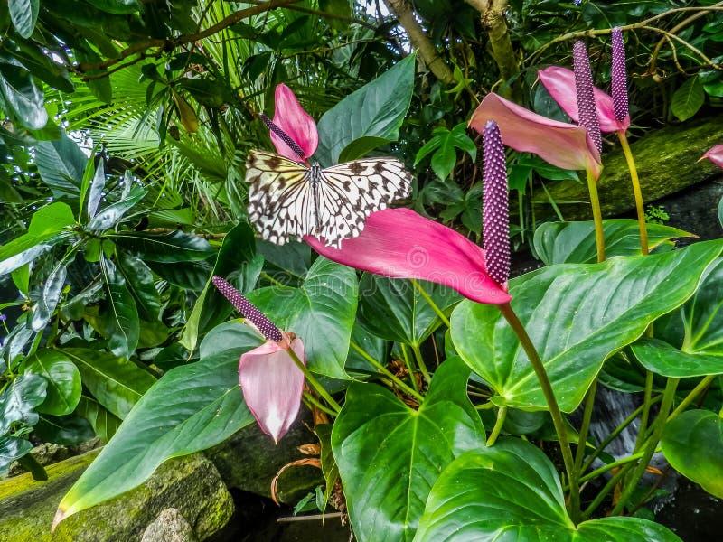 Пурпурный цветок с бабочкой стоковое изображение rf