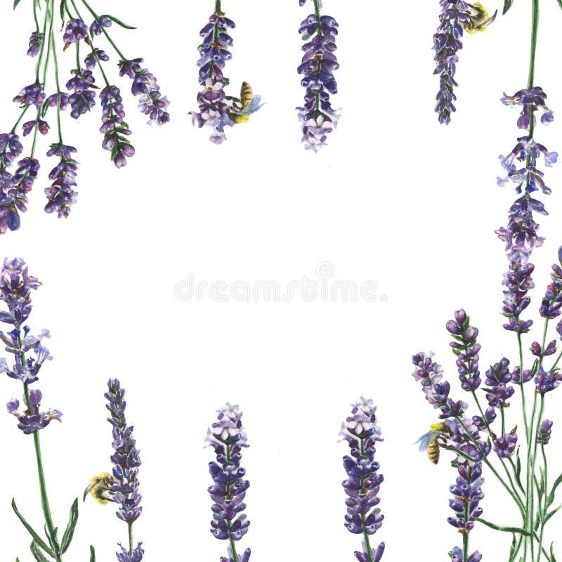 Пурпуровая лаванда Флористический ботанический цветок Квадрат орнамента границы рамки стоковая фотография rf