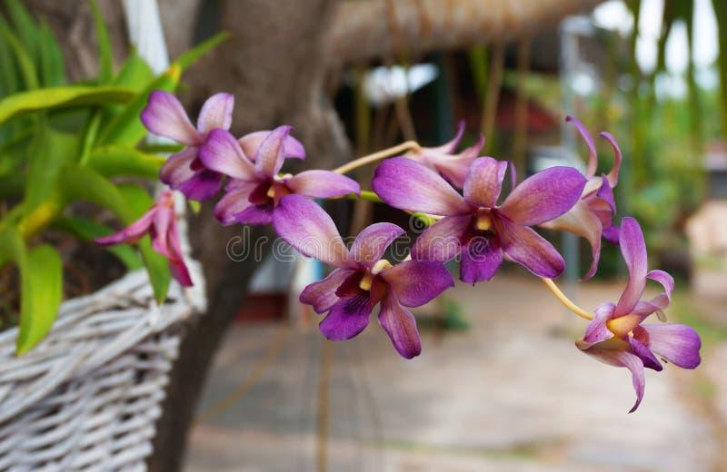Download Пурпуровая орхидея стоковое фото. изображение насчитывающей украшение - 40582112
