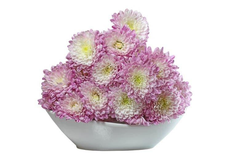 Пурпуровая хризантема стоковая фотография rf