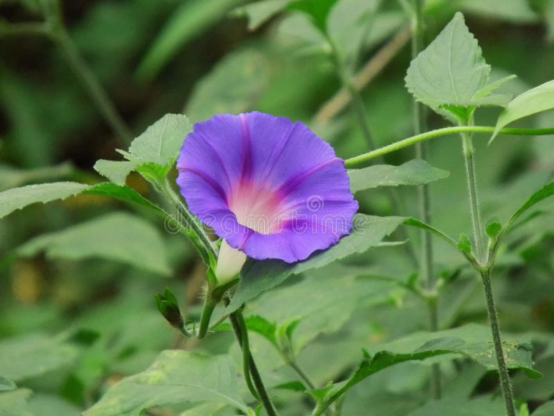 пурпурово Цветок стоковые фото