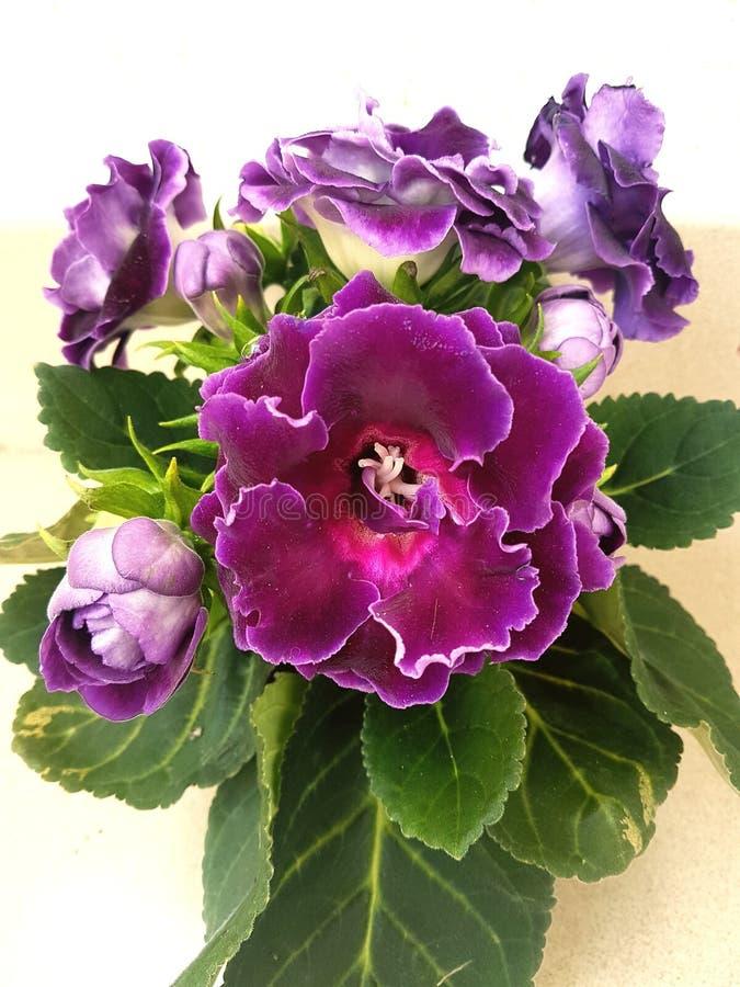 пурпурово стоковое фото rf