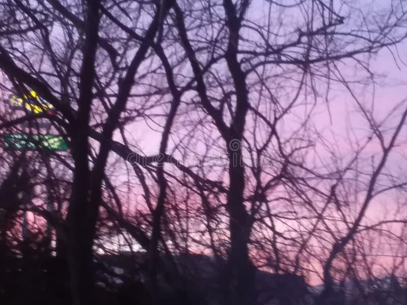пурпуровые небеса стоковые изображения rf