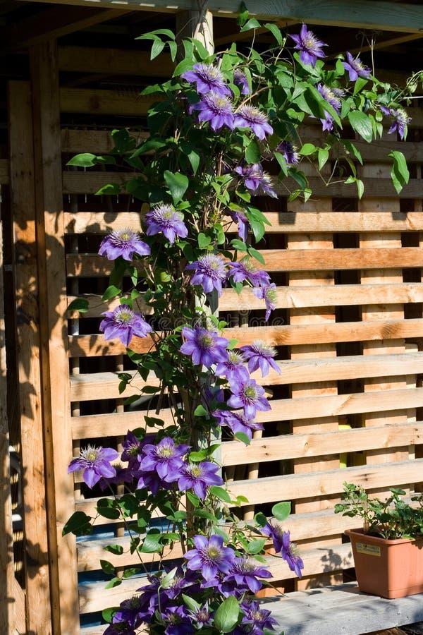 Пурпуровые цветки стоковая фотография