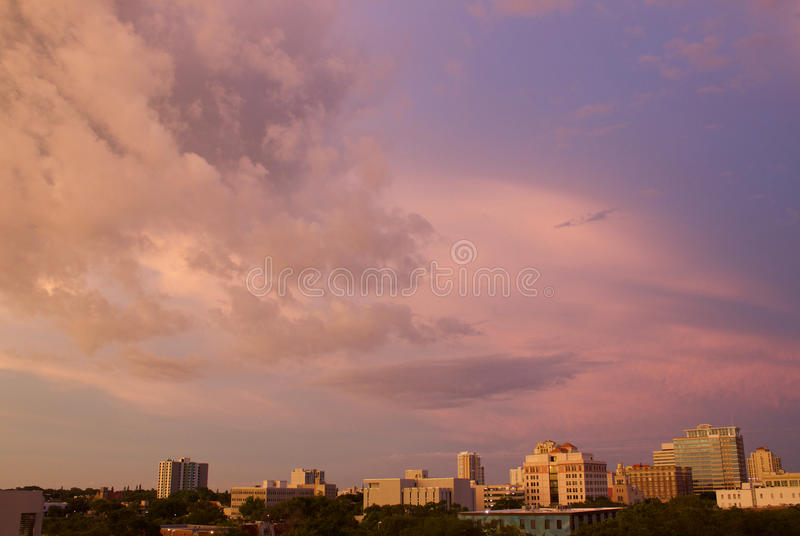 Пурпуровый помох стоковые фото