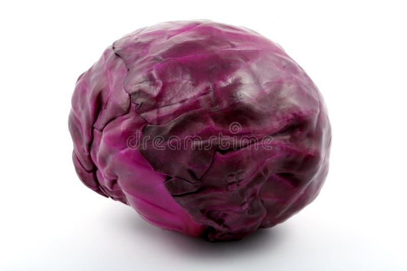 пурпур капусты стоковые изображения