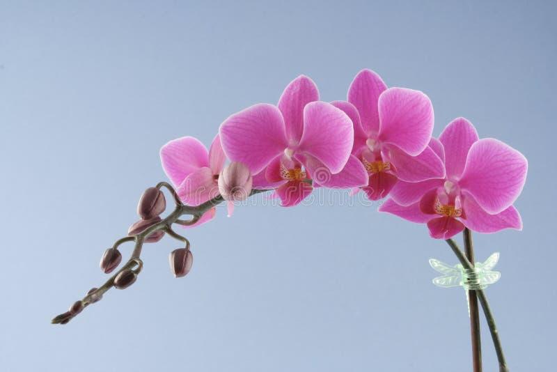 пурпур орхидеи стоковые фото