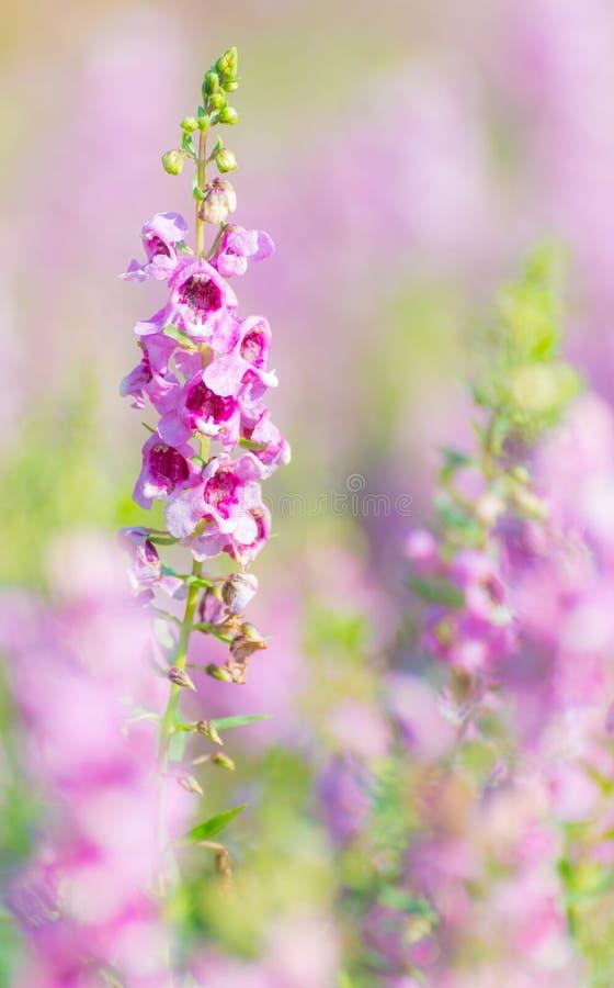 пурпур узкой части сада цветка поля глубины стоковые изображения