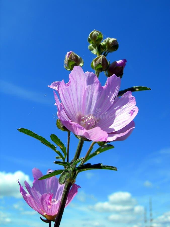 пурпур цветка стоковое изображение