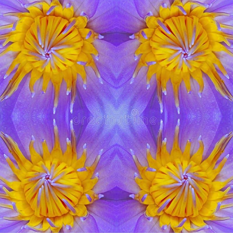 Download пурпур waterlily стоковое фото. изображение насчитывающей closeup - 40582078