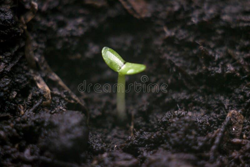 пускайте ростии детеныши стоковая фотография rf