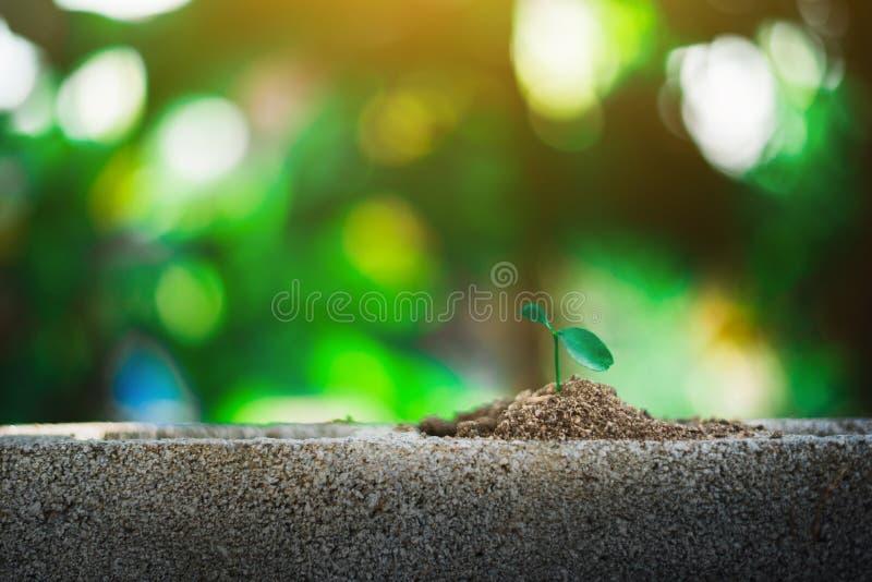 пускайте ростии расти на земле стоковое изображение rf