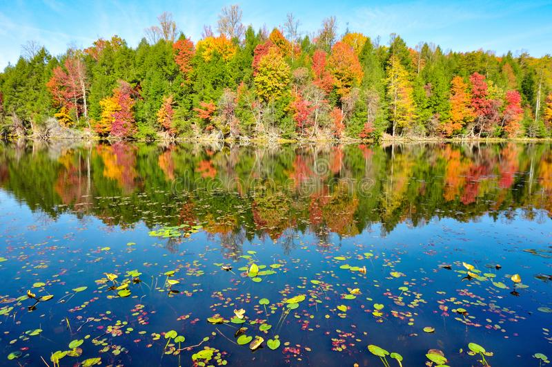 Пусковые площадки лилии и отражения зеркала цветов падения на озере гор заливов в Kingsport, Теннесси во время осени стоковое фото rf