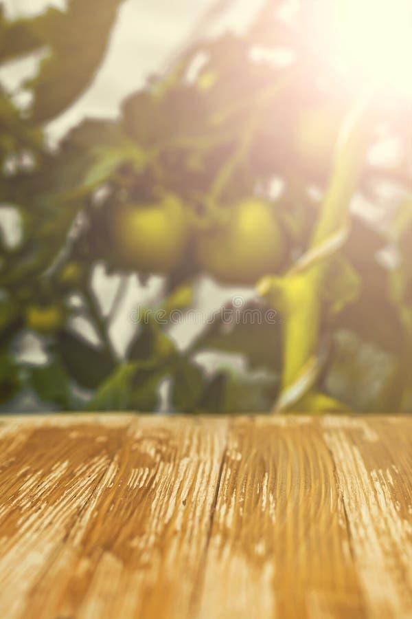 Пустая деревенская деревянная столешница на запачканной зеленой предпосылке томатов стоковая фотография