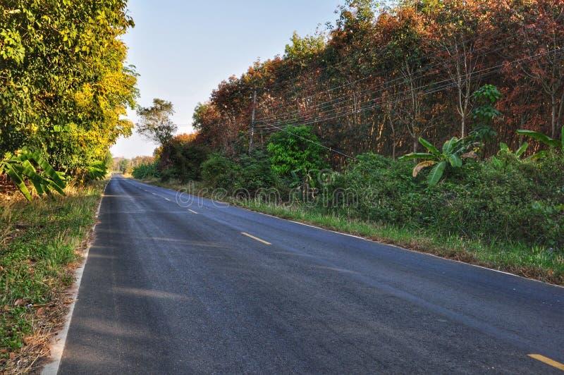 пустая дорога стоковое фото